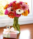 gerbera_daisies