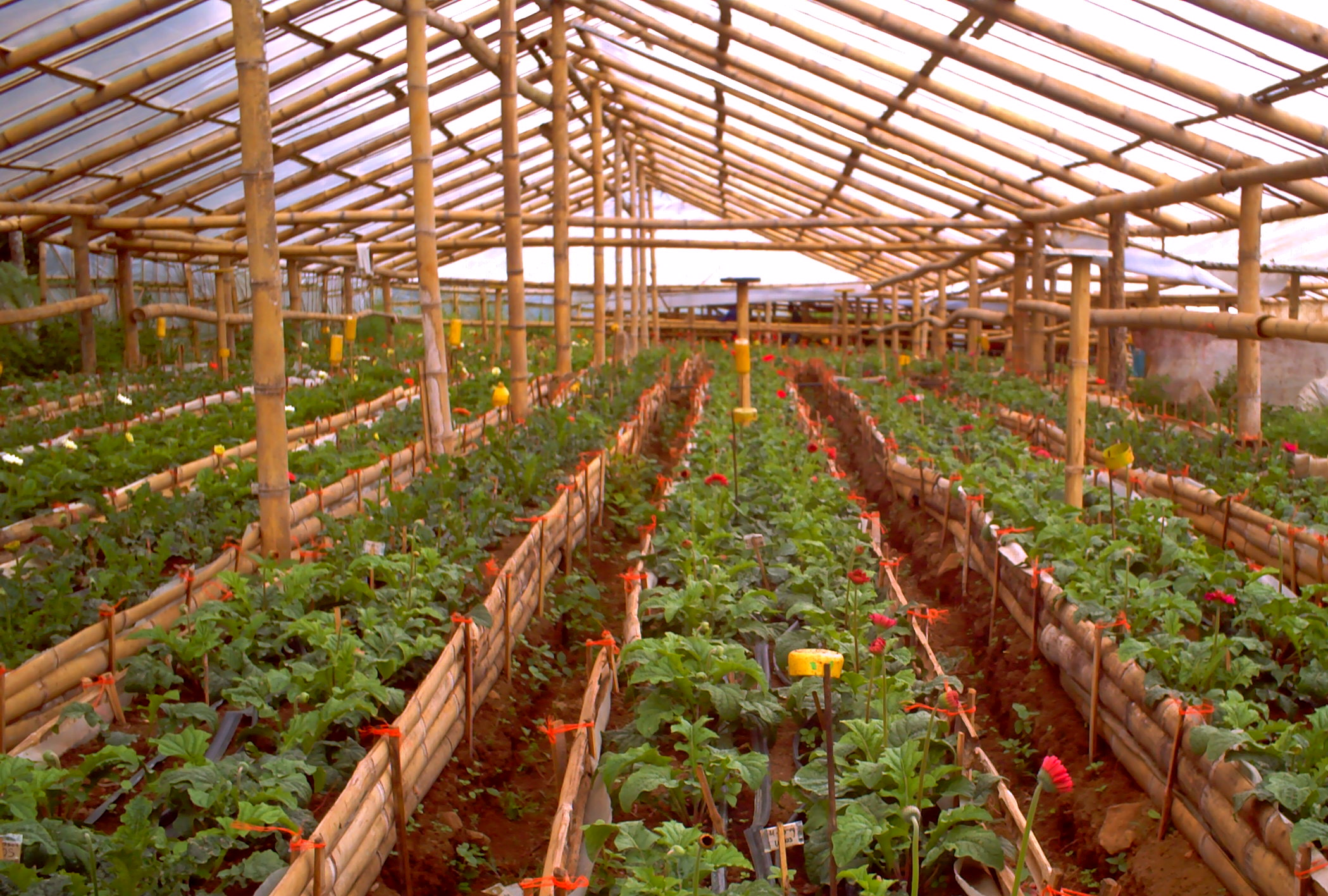 truly greenhouses our farm by earth flora inc