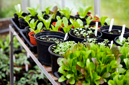 Starting Your Own Kitchen Garden Our Farm By Earth Flora Inc