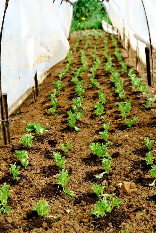 Easy Vegetables To Grow In The Tropics Our Farm By Earth