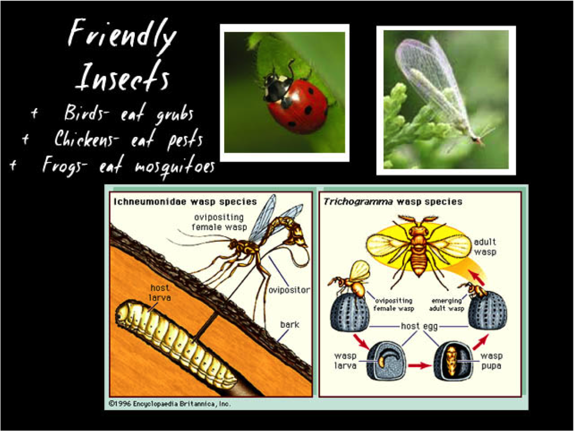 an overview of the beneficial insects and the use of biological control Viruses as biological control agents of insect biological control of insects and mites: an introduction to beneficial natural enemies and their use in pest.