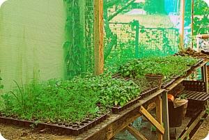 Backyard Farm Nursery
