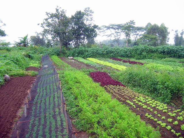 Agriculture | Our Farm by Earth Flora Inc