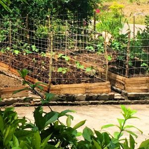 Raised beds using pallets